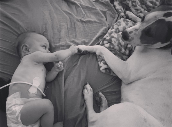 cachorro-adotado-cuida-de-bebe-prematura-reproducao-instagram-jpegdotjpeg