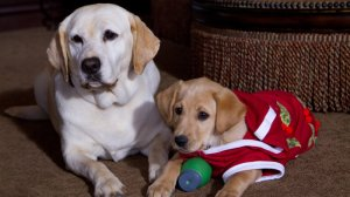dog_saved_holidays