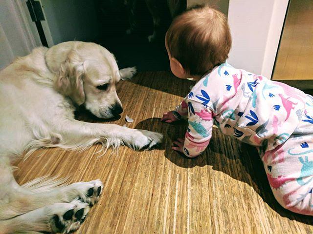 Vídeo: bebê recebe ajuda de cachorros para escapar do quarto