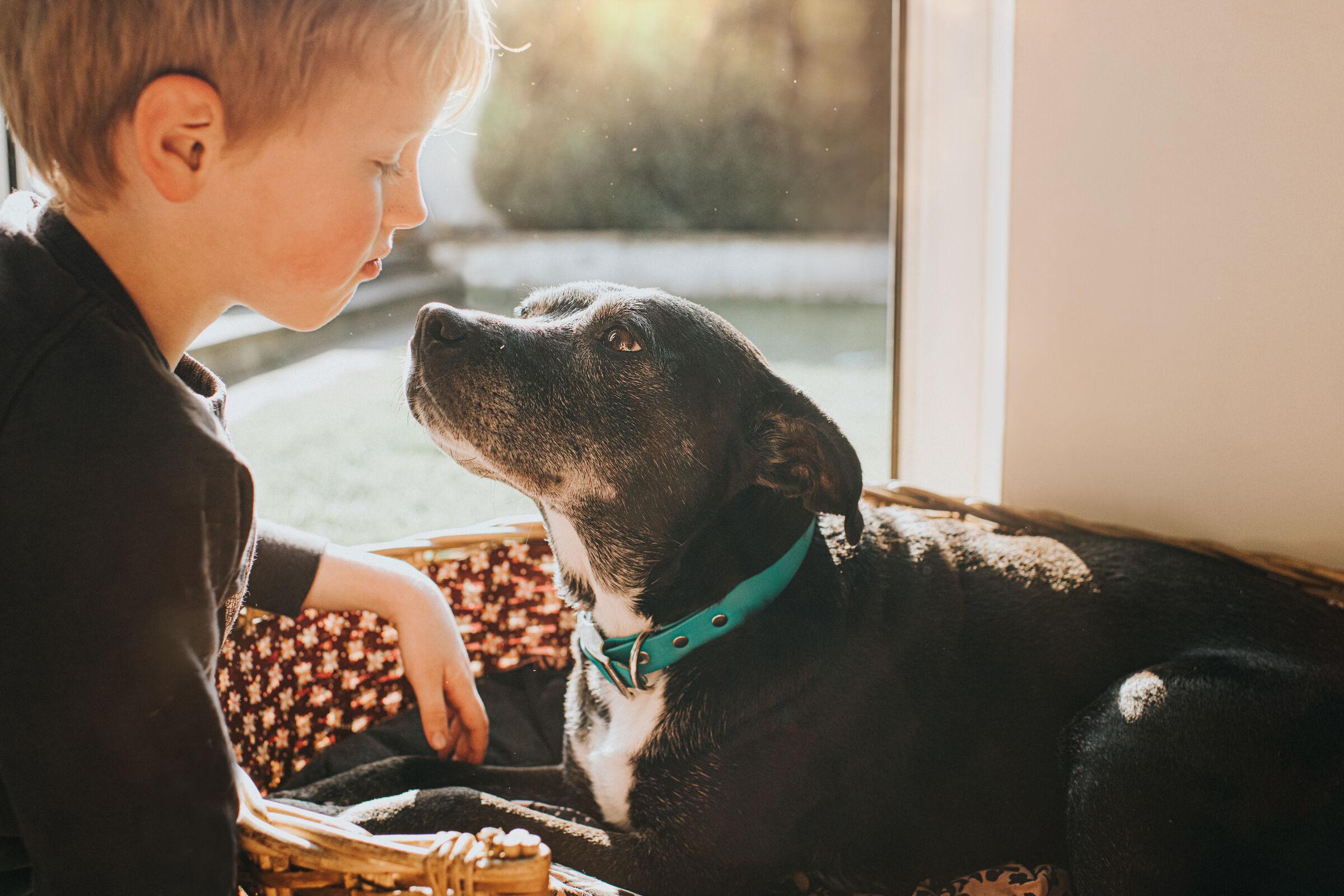 Cachorro-velhinho-com-crianca-ao-lado